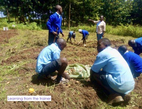 Sustainable farming tactics