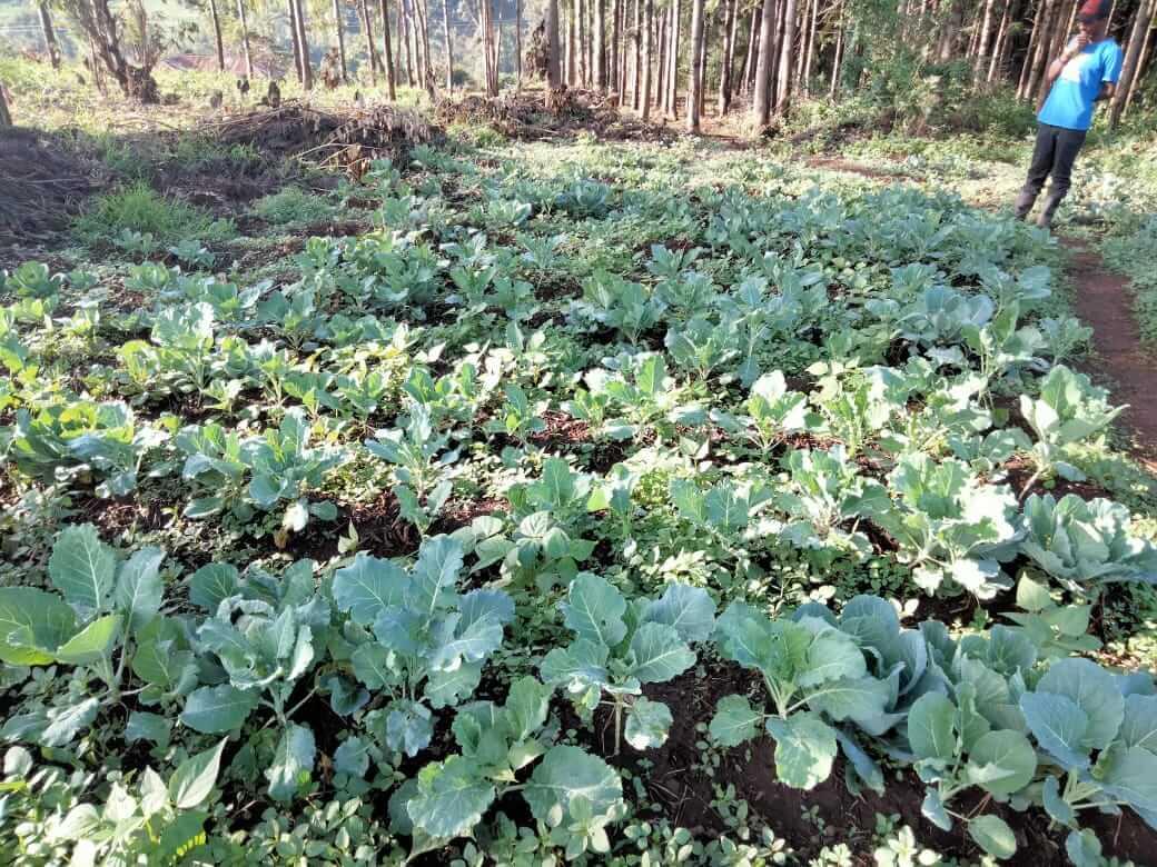 The plot grows kale